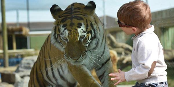 ROMAG GLASS PASSES THE BIG CAT TEST
